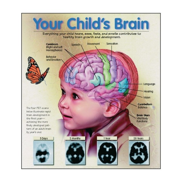 child developing brain
